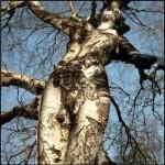 Sexy Tree
